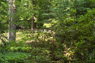 Quaker Cemetery .jpg