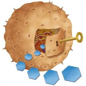 Esquema de la simplificación del funcionamiento de la insulina (llave) tomada del sitio Vidaysalud.com