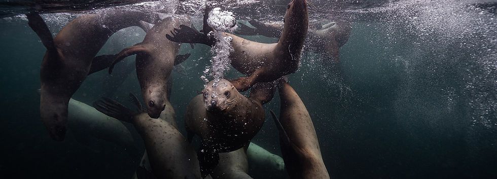 freediving-sea-lions.jpg