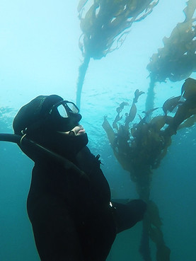 Kelp Forest in BC