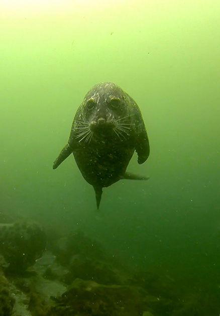 bc-marine-life.jpg