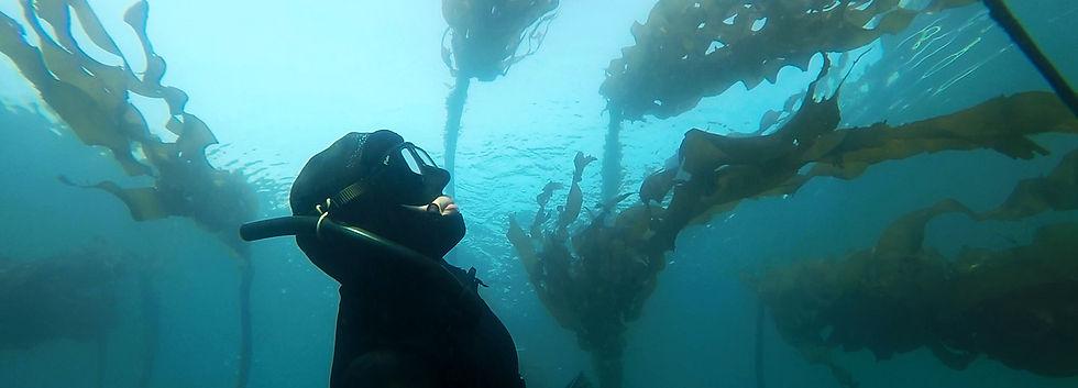 freediving-bc.jpg
