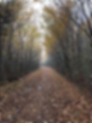 tree-avenue-sm.jpg