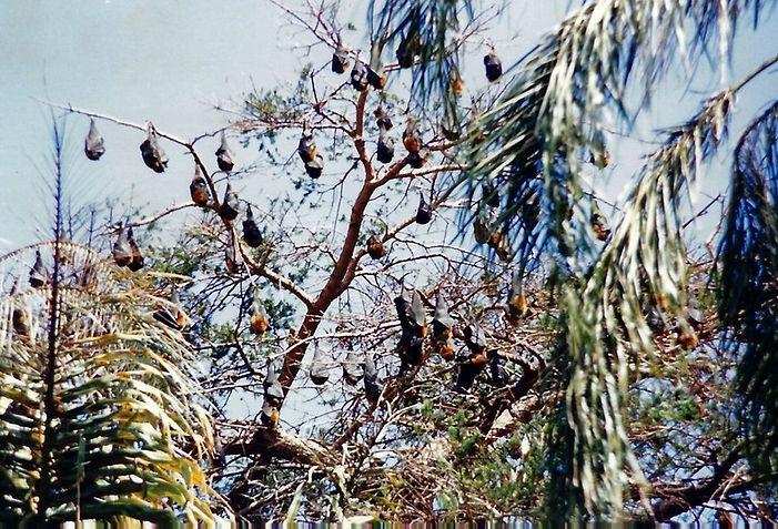עטלפים, אוסטרליה - יומן מסע - טיול אחרי צבא