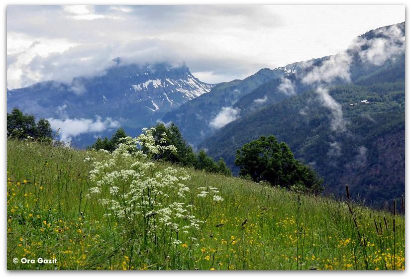 נוף האלפים הצרפתיים - טרק - סובב מון בלאן