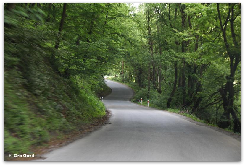 דרך מתפתלת ביער - סלובקיה
