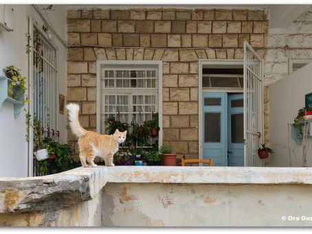 ברחובות של חיפה יש קסם מיוחד