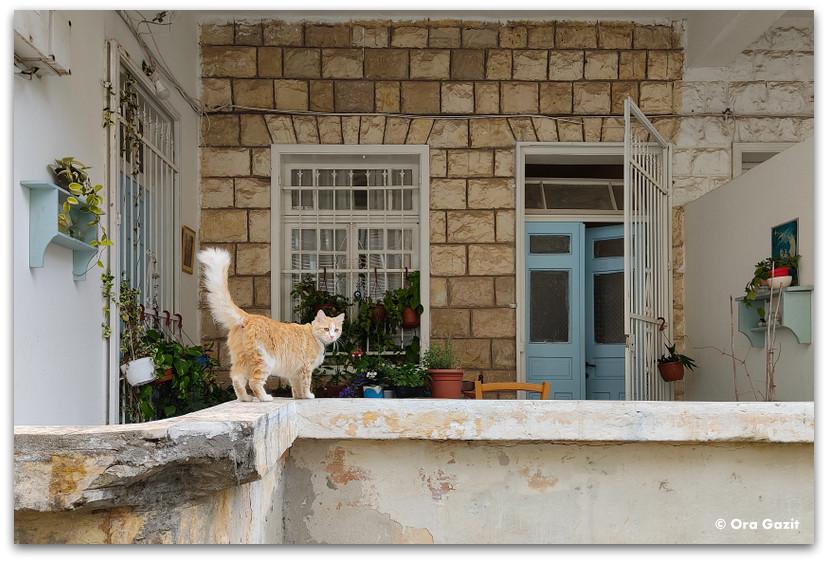 מרפסת עם חתול - רחובות בהדר - שמות רחובות בחיפה - טיול בחיפה