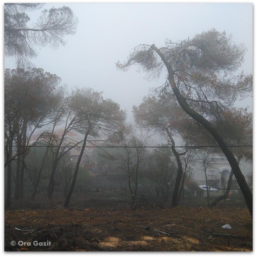 שריפה בחיפה - היער השחור