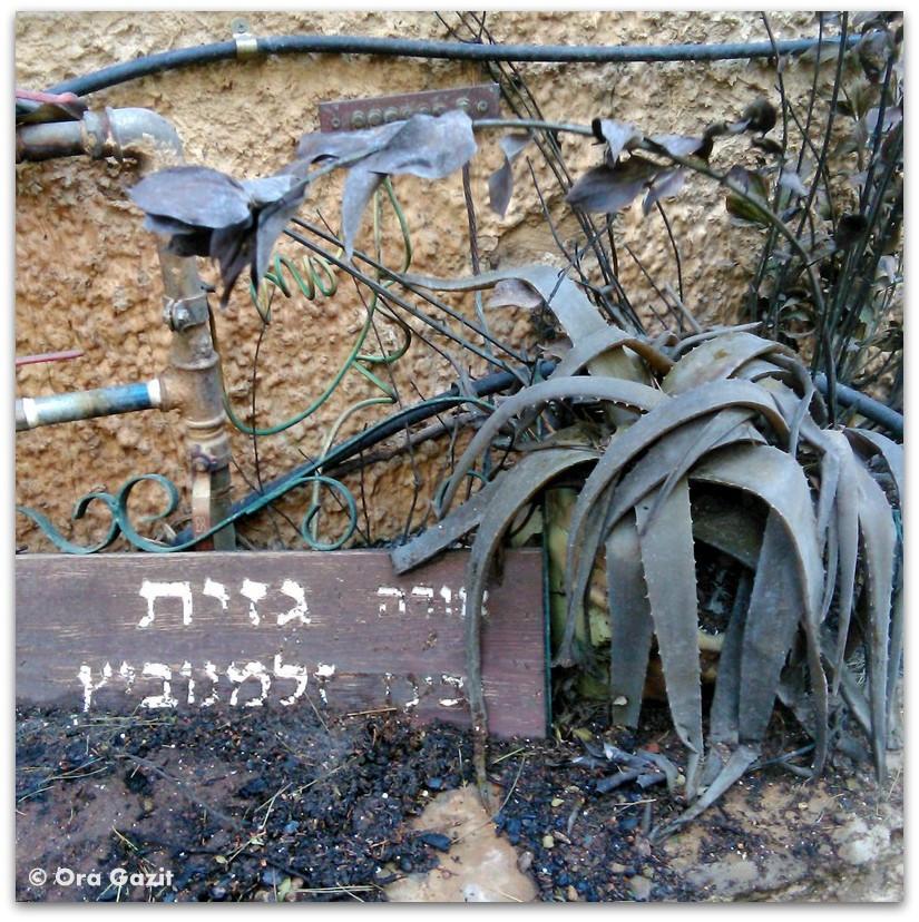 שלט הבית - שריפה בחיפה - היער השחור