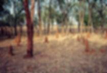 קיני טרמיטים, אוסטרליה - יומן מסע - טיול אחרי צבא