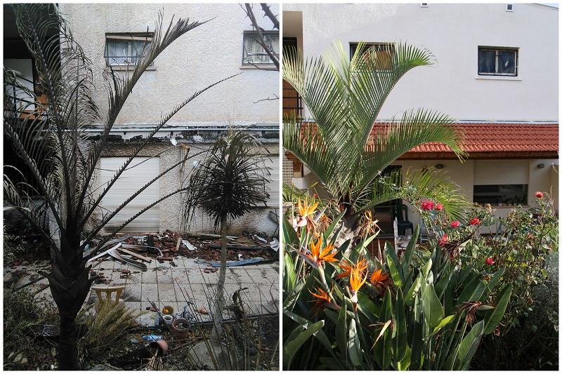הגינה ירוקה ופורחת והגינה השרופה - שריפה בחיפה