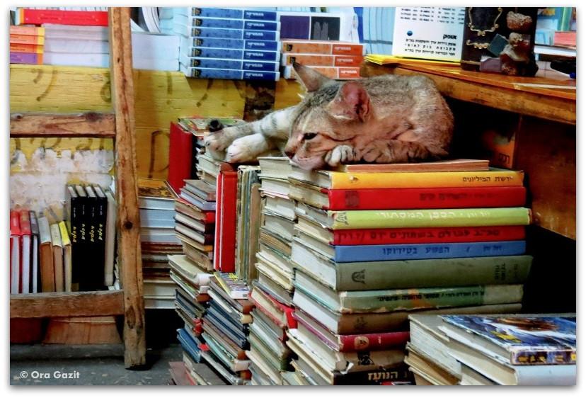 חתול יושב על ערימת ספרים - ספרי מסע - ספרים מומלצים