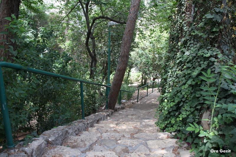 הירידה לנחל לטם - שביל חיפה - טרק - טיול בחיפה
