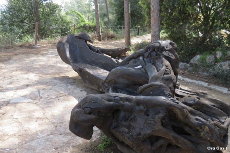 ספסל עץ - הטכניון - שביל חיפה- טרק - טיול בחיפה