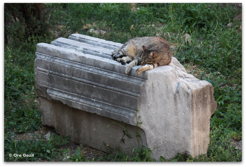 חתול מנמנם - רומא עם ילדים, איטליה