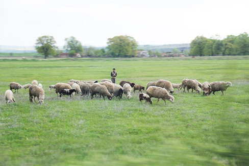 Countryside (2).jpg