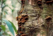 פטריות עץ, אוסטרליה - יומן מסע - טיול אחרי צבא