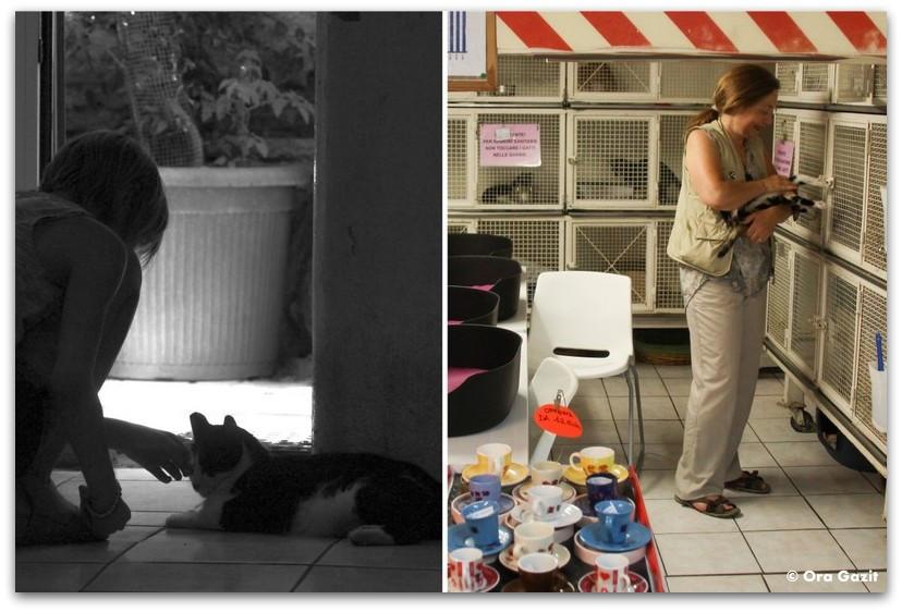 במקלט לחתולי רחוב - רומא עם ילדים, איטליה