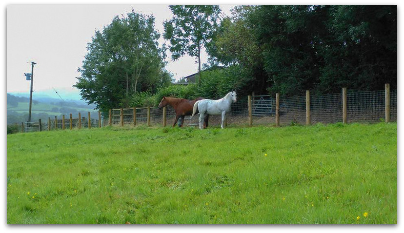 שני סוסים - טרק - וולס