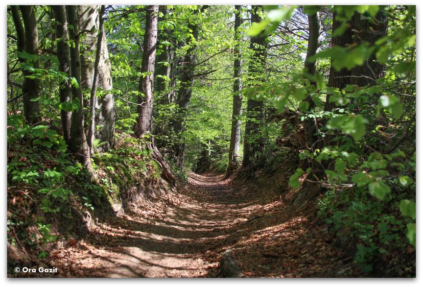 שביל ביער - טרק - גן העדן הסלובקי - סלובקיה