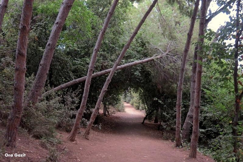 שביל ביער - שביל חיפה - טרק - טיול בחיפה