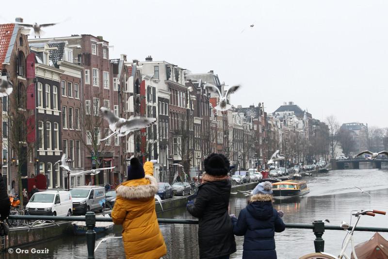 תעלה ומעליה שחפים - אמסטרדם המלצות - אמסטרדם בחורף