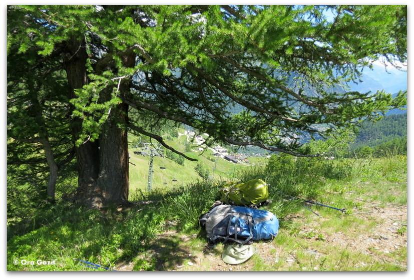 עץ גדול - טרק - סובב מון בלאן - יומן מסע