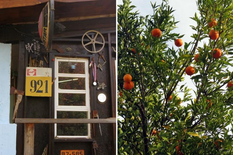 עץ קלמנטינות - התנדבות - חאן יותם