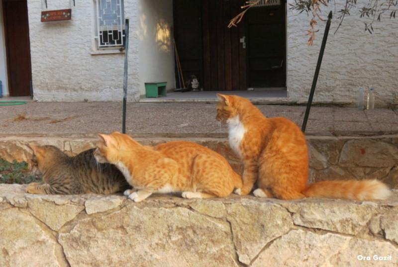 חתולים - שביל חיפה - טרק - טיול בחיפה