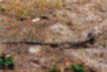 חרדון, אוסטרליה - יומן מסע - טיול אחרי צבא