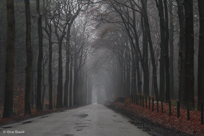 שדרה בערפל - טיול בהולנד