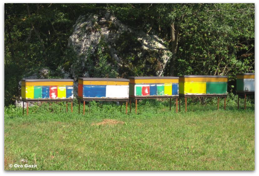 כוורות דבורים, סלובניה