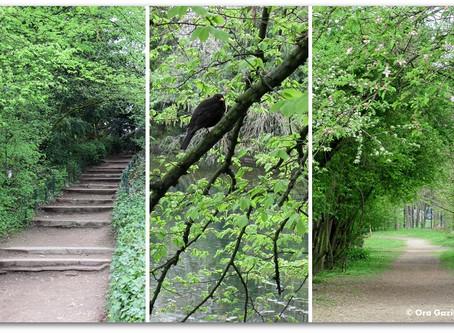 פארק ירוק בלב עיר הומה
