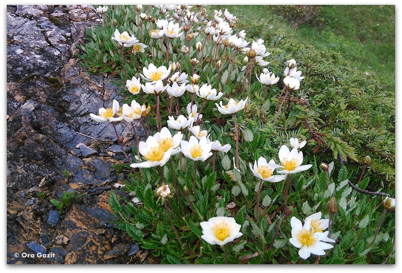 פרחים - טרק - סובב מון בלאן - יומן מסע