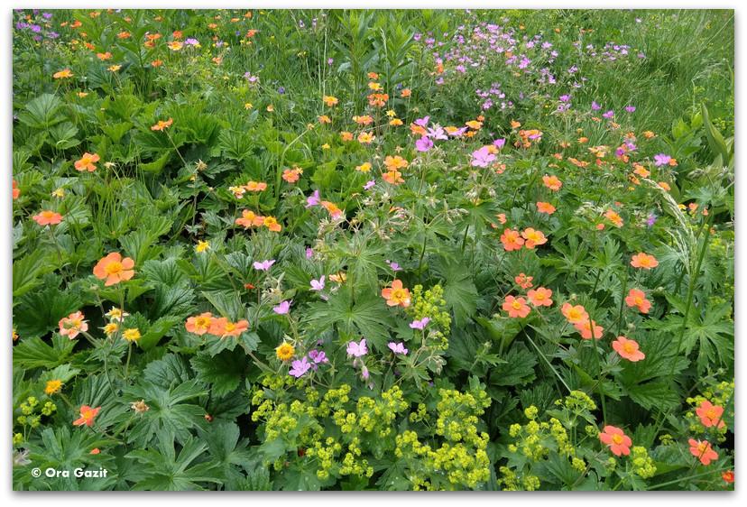 פרחי אביב - טרק הרי רילה - טרקים בבולגריה - יומן מסע