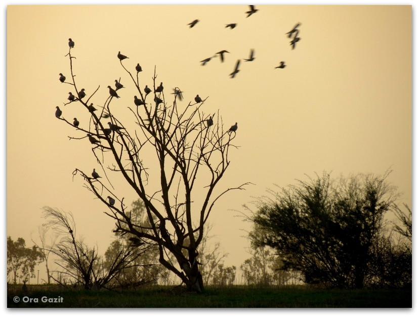 עץ וציפורים - חלומות שמורים, בלוג