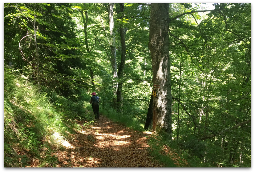 שביל ביער - טרק הרי רילה בולגריה - יומן מסע