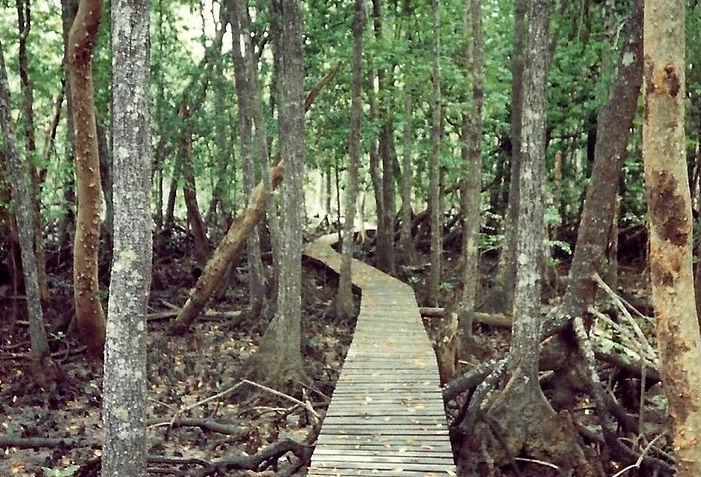 מנגרובים, אוסטרליה - יומן מסע - טיול אחרי צבא