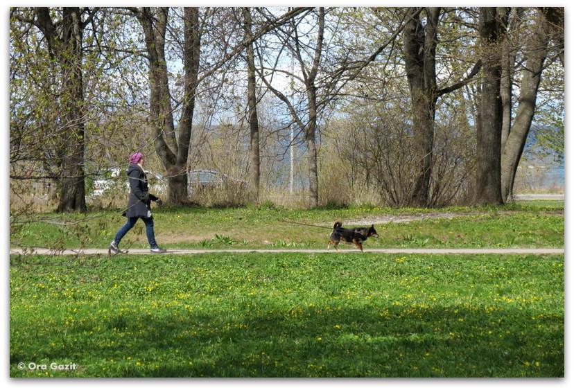 אשה וכלב - פארק - טאלין