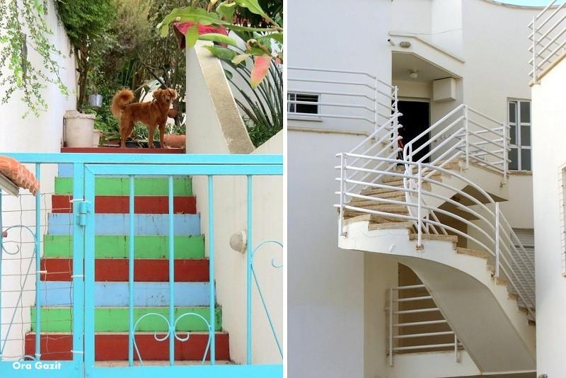 כלב ומדרגות מעניינות - שביל חיפה - טרק - טיול בחיפה