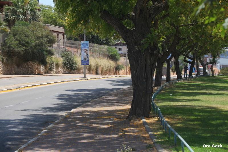 שדרה - שער עליה - נחל לטם - שביל חיפה - טרק - טיול בחיפה