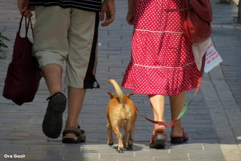 זוג עם כלב - שביל חיפה - טרק - טיול בחיפה