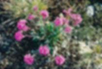 פרחים ורודים, נורבגיה - יומן מסע - טיול אחרי צבא