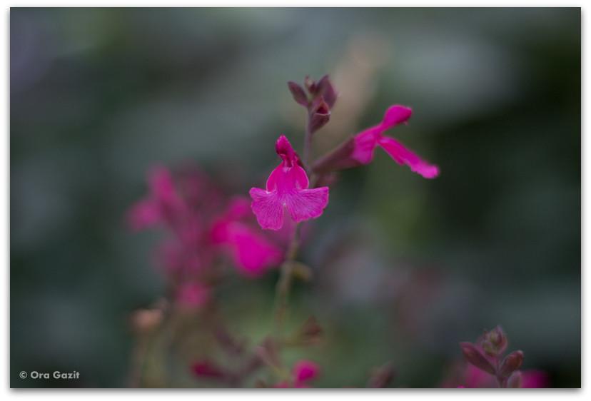 פרחים - שיקום לאחר שריפה