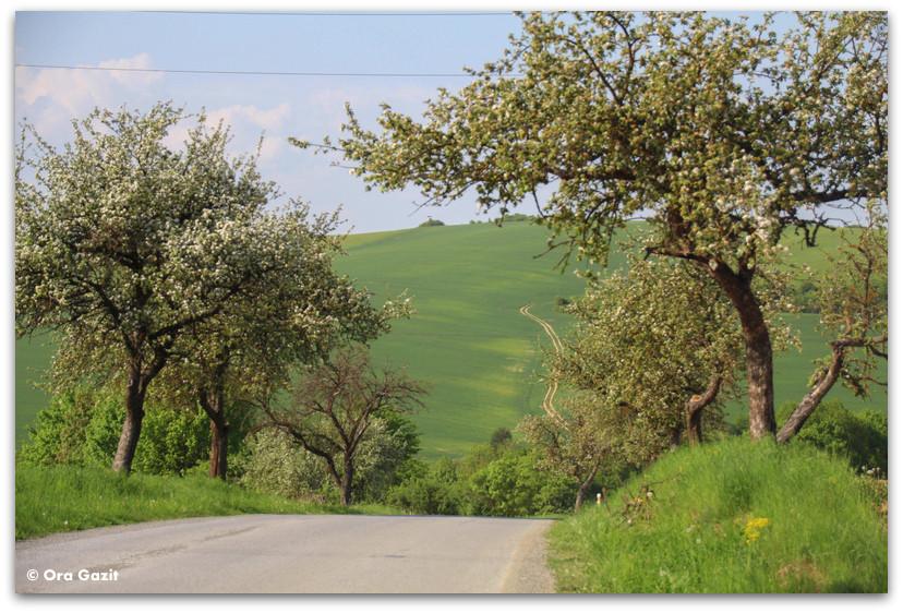 דרך כפרית - סלובקיה