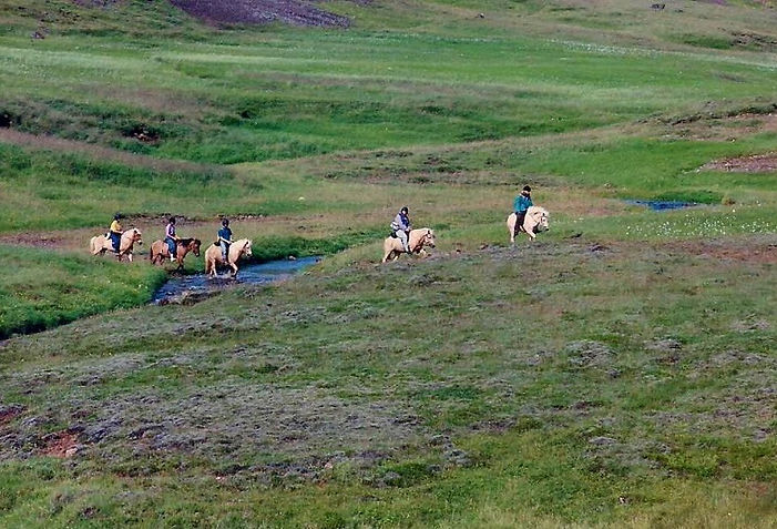 סוסים, איסלנד - יומן מסע - טיול אחרי צבא