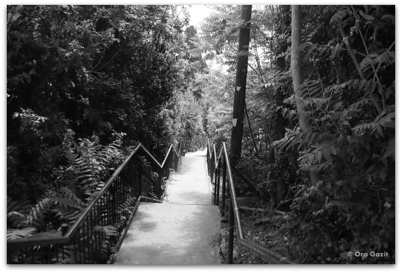 גרם מדרגות - מה לעשות בחיפה - מסלול 1000 המדרגות