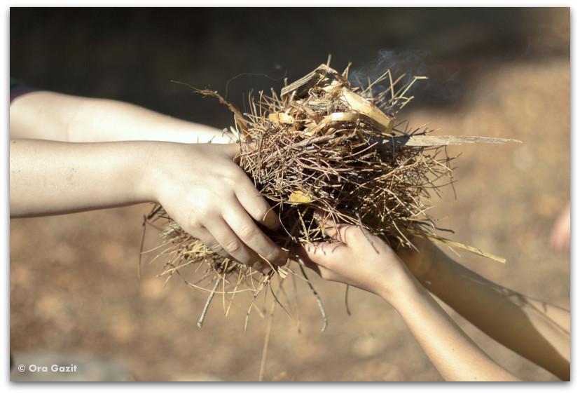 העברת ענפים - שומרי הגן - המלצה על ספר - שורשים