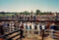 שוק בקר, אוסטרליה - יומן מסע - טיול אחרי צבא